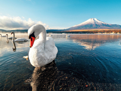 dawn, snow, mountain, Swan, lake, sunset