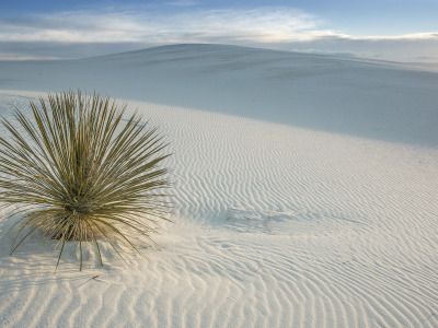Пустыня, USA, США, New Mexico, San Miguel, White Sands National Monument