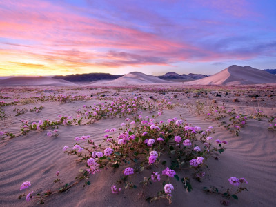 Death Valley, Superbloom, Природа
