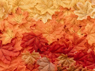 background, осенние, colorful, фон, leaves, листья, autumn, maple, Осень